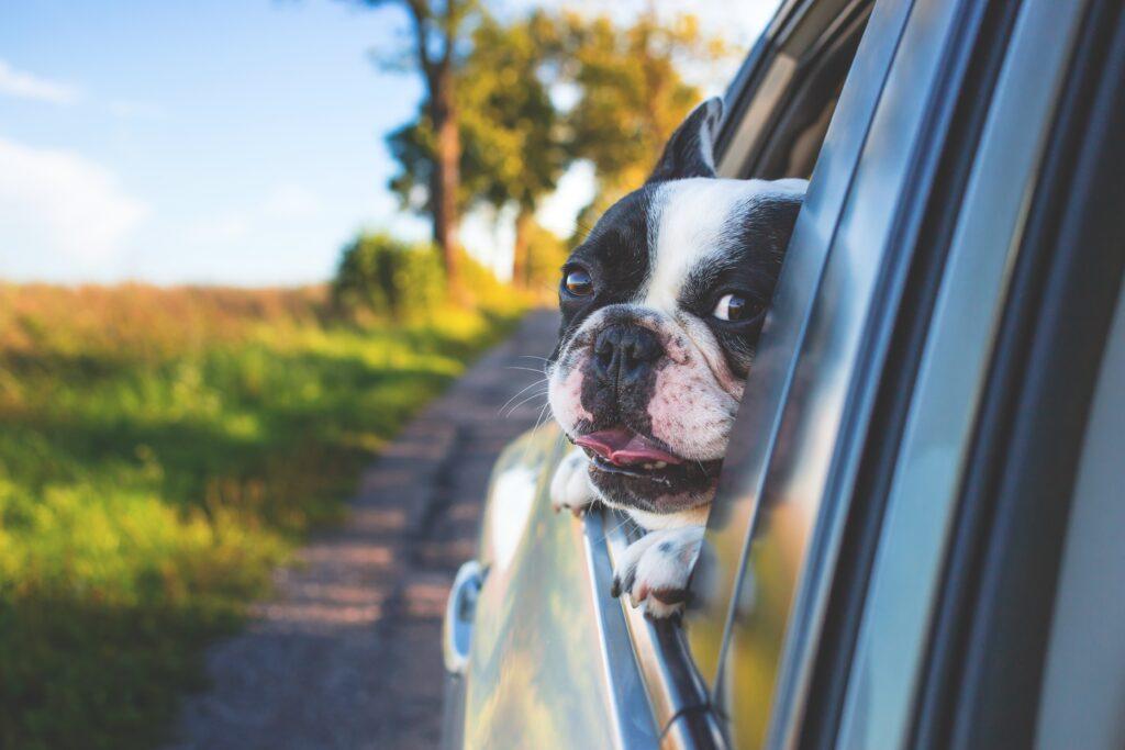 Dog hair in car
